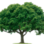 Trees Can Potentially Cause Damage to Your Property!