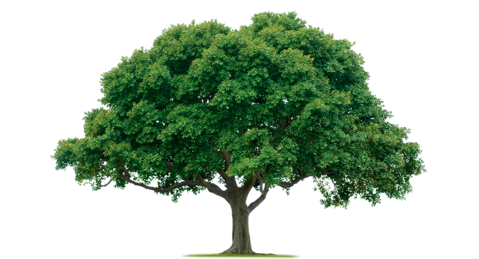 trees-can-potentially-cause-damage-to-your-property