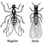 Spotting Termites