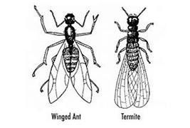 spotting-termites