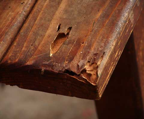 What Does Termite Damage Look Like Resicert